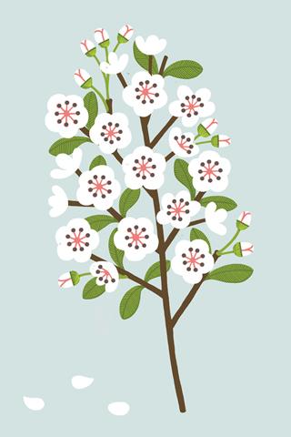 Poolga - Blossom - Sarah Abbott